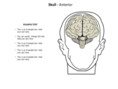 Head Neck power point download